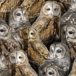 Nocturnal Wonders Packed Barred Owls - Black